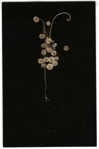 Artist: Masao Yamamoto