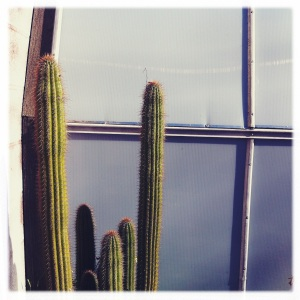 """""""And a letter in your writing doesn't mean you're not dead"""" Pixies, Cactus"""