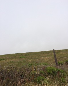 point reyes june15