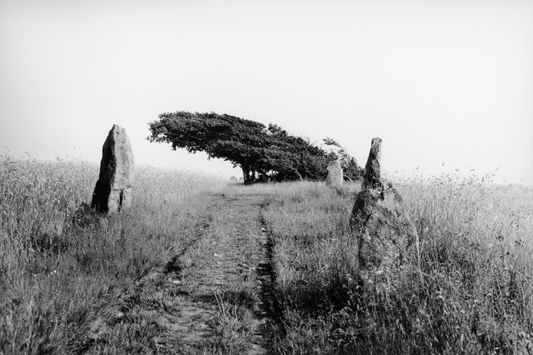 The stones of Örelid, an Iron Age burial ground with standing stones in a field of rye, Sweden, 1930